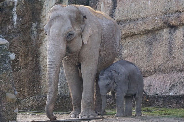 elephant-860236_640